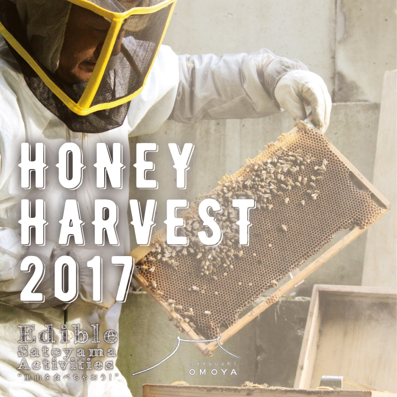 HONEY HARVEST 2017