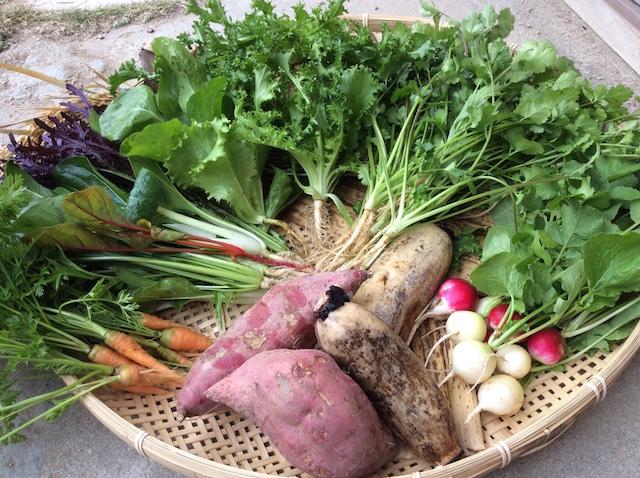 オーガニック野菜のお取り寄せ