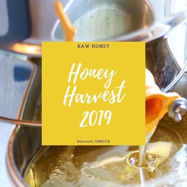 HONEY HARVEST 2019